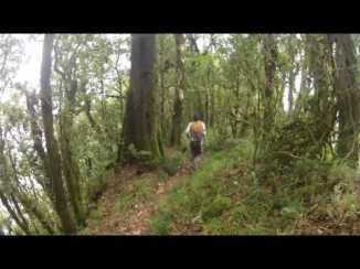 hike to the top of batukaru mount